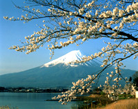Fuji_Spring Time Magical Japan