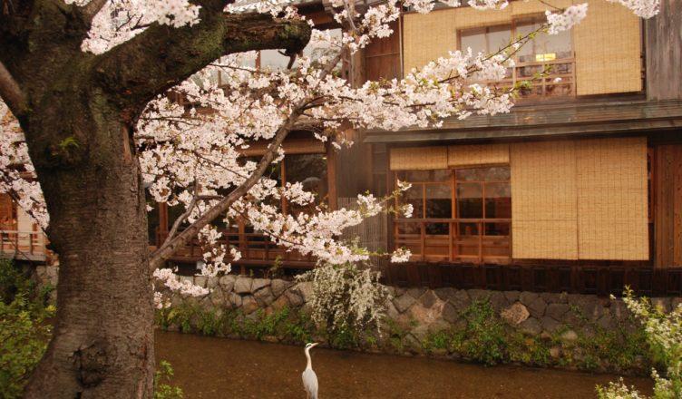 Gyon Kyoto