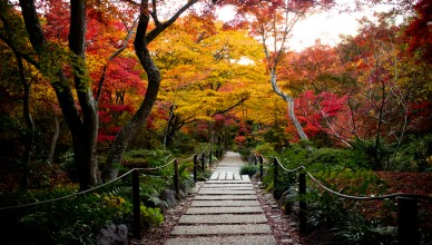 Autumn in Japan Magical Japan