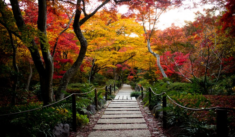 Autumn in Japan Magical Japan