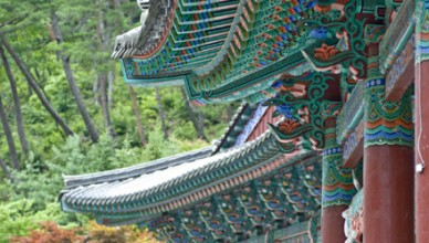 Visit Korea with Magical Korea tour operator