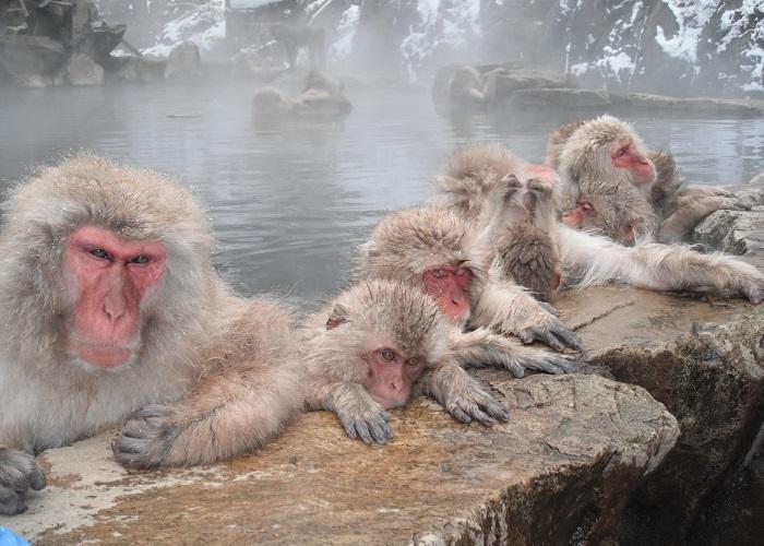 snow monkeys magical explorer